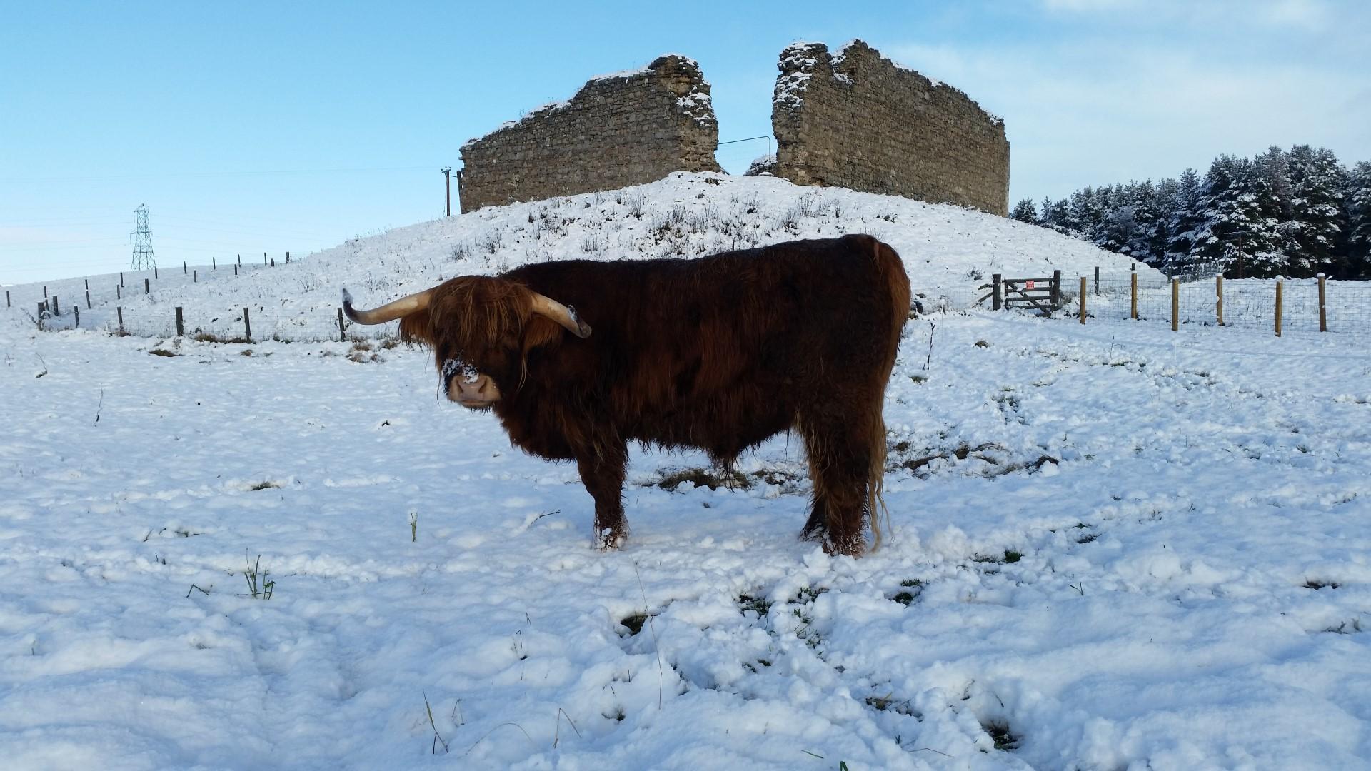 Murdo in the snow