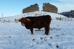 Murdo in the snow