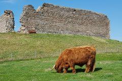 Murdo, Castle Roy